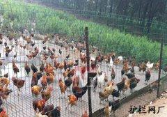 养殖护栏网圈地护栏网案例